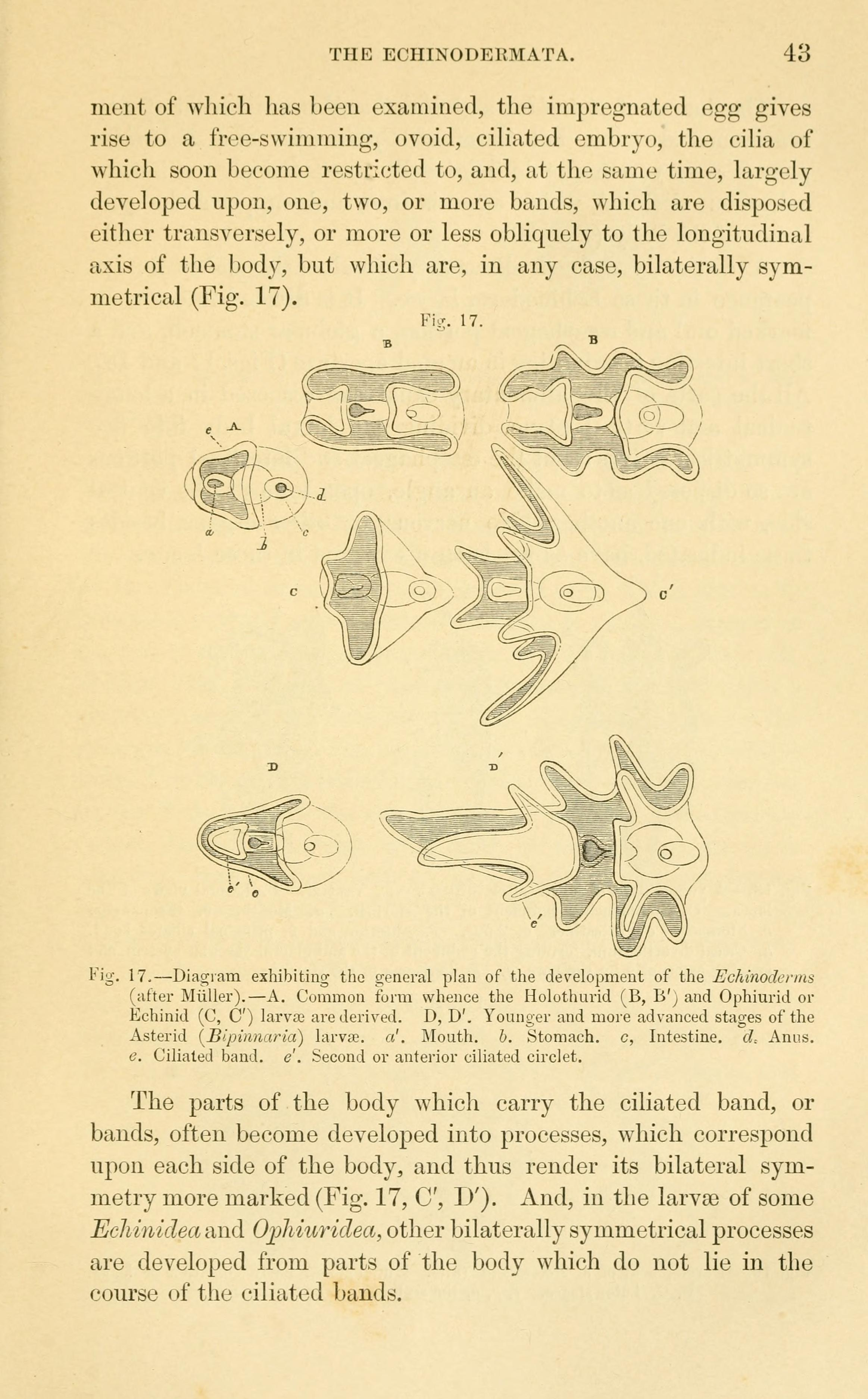 Filelectures On The Elements Of Comparative Anatomy Page 43