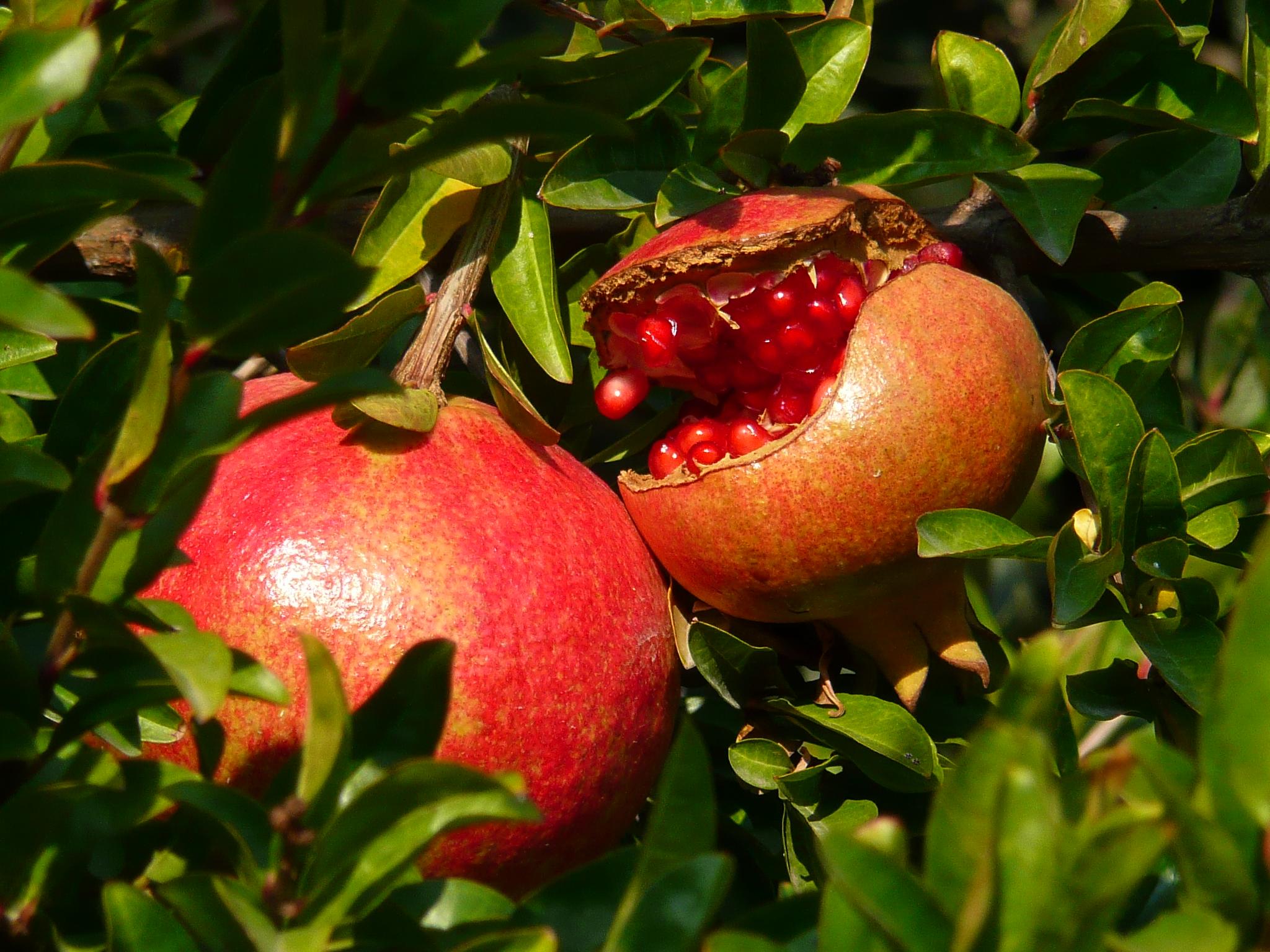 Frutas de Granada