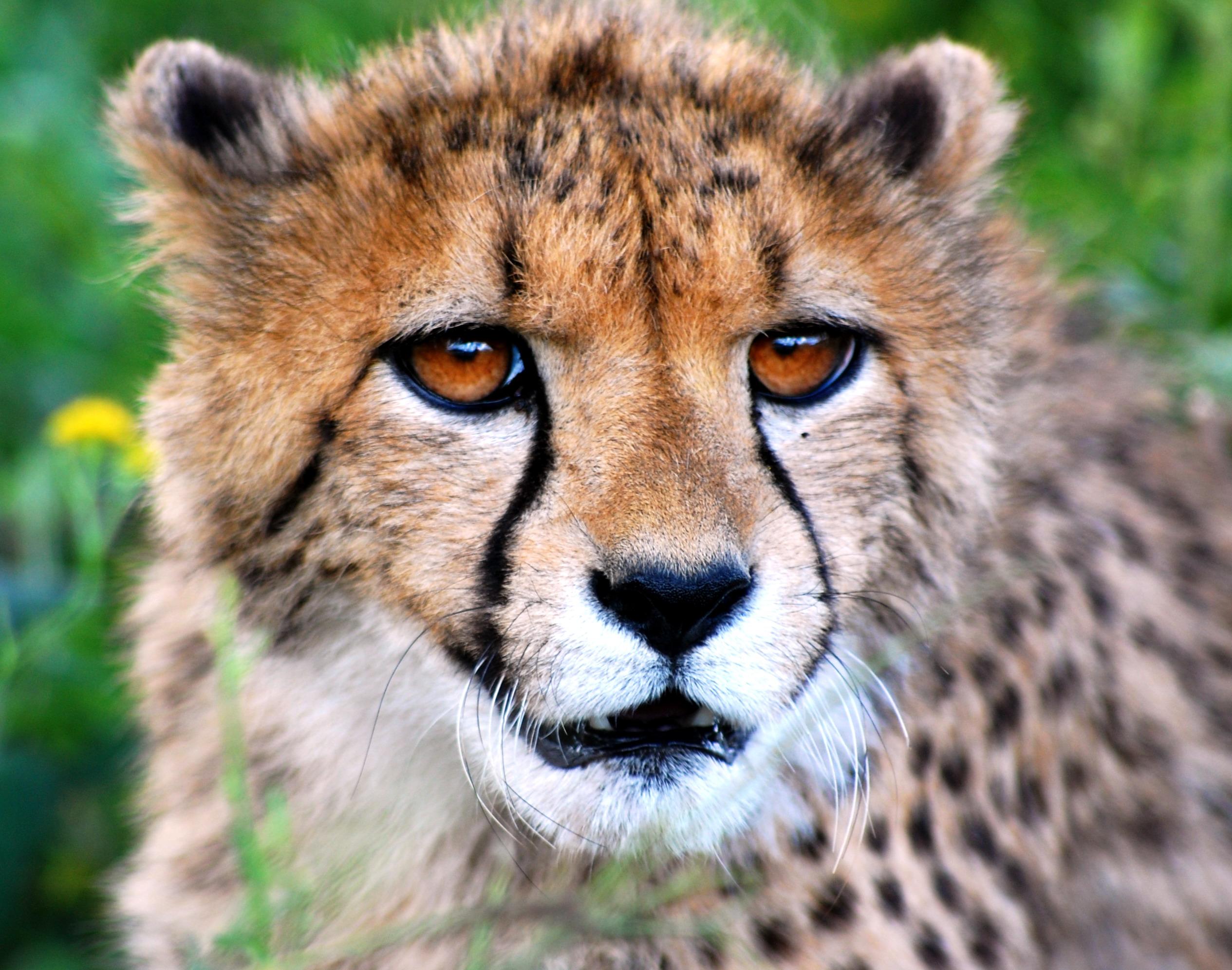 Image result for tsaobis leopard nature park