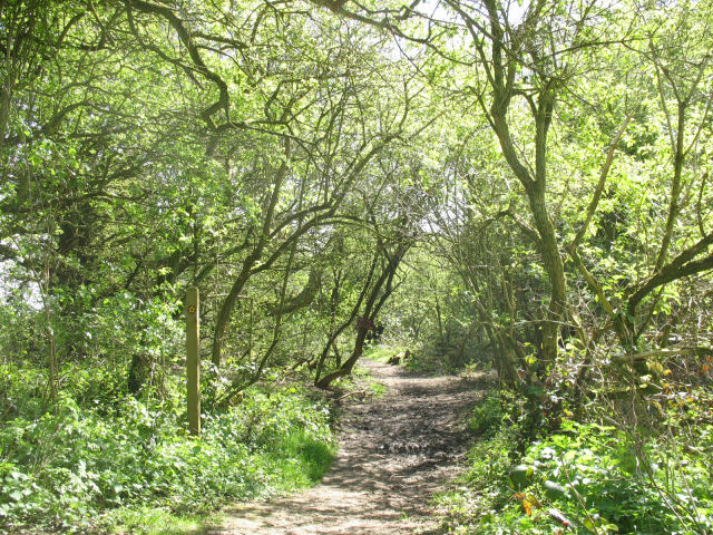 North Downs Way, north of Hollingbourne - geograph.org.uk - 778330