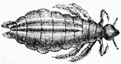 Hovedlus