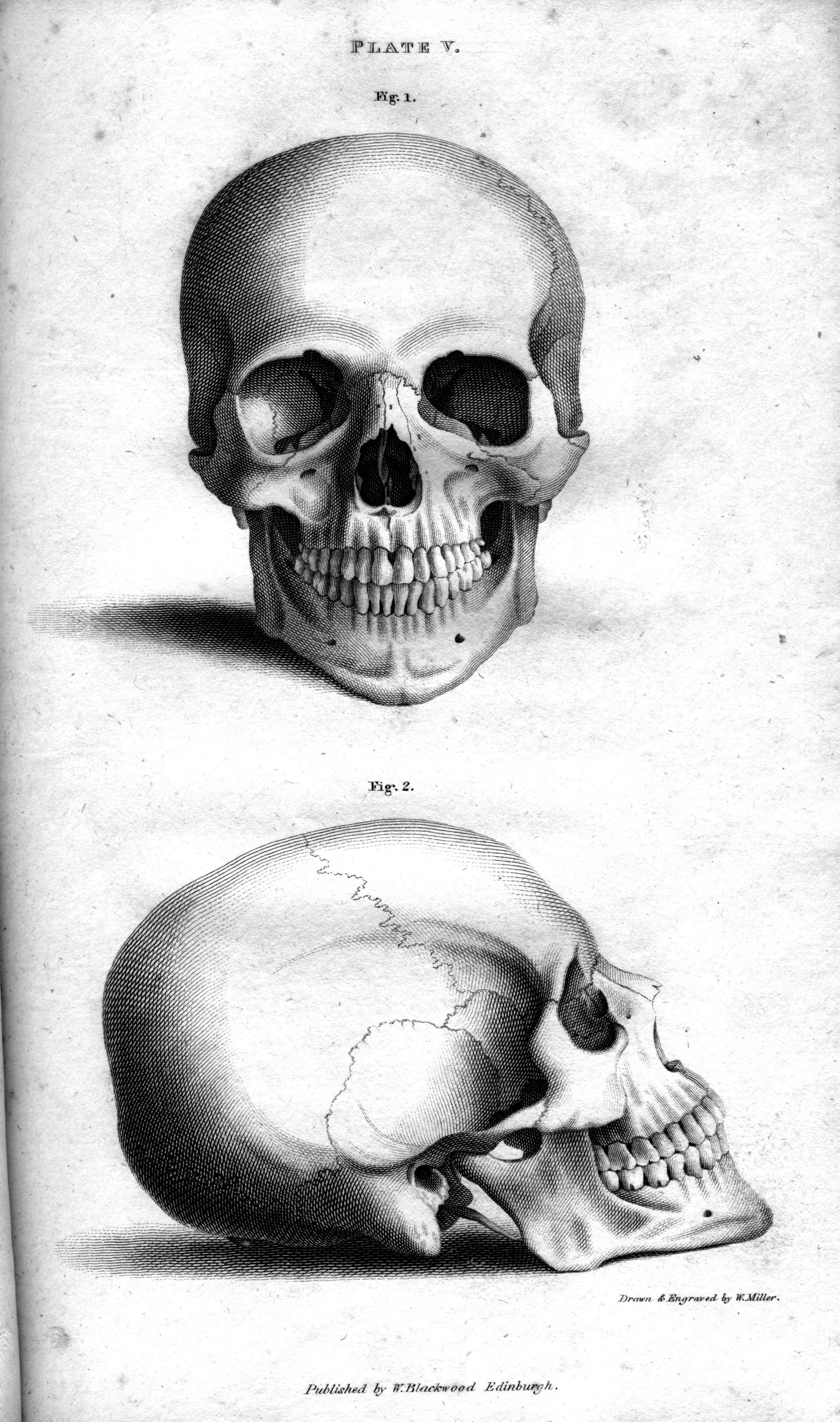 File:Plate Vb Human Skull, engraving by William Miller after drawing ...