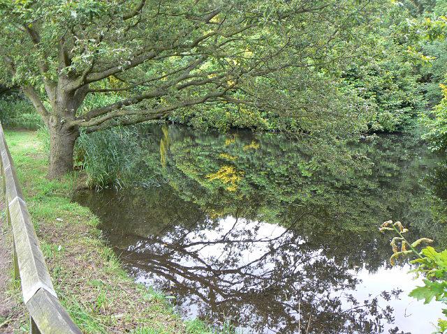 Pond in Burntstump Park - geograph.org.uk - 1428420