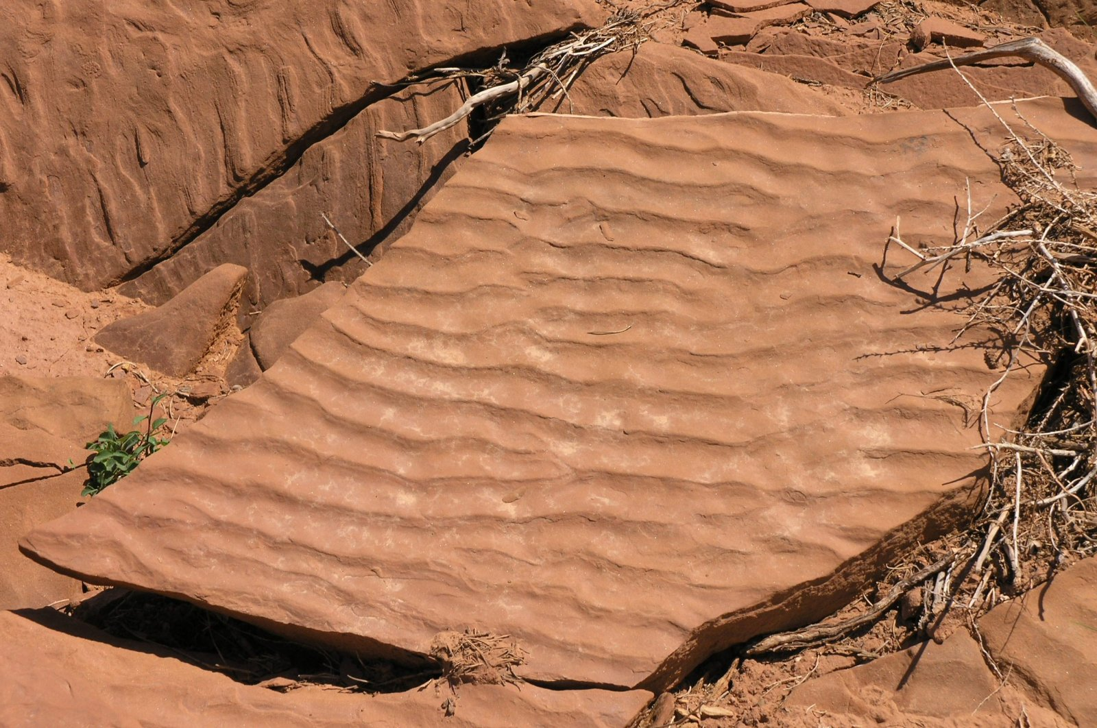 notes on sedementary rocks Sedimentary rock definition at dictionarycom, a free online dictionary with pronunciation, synonyms and translation look it up now.