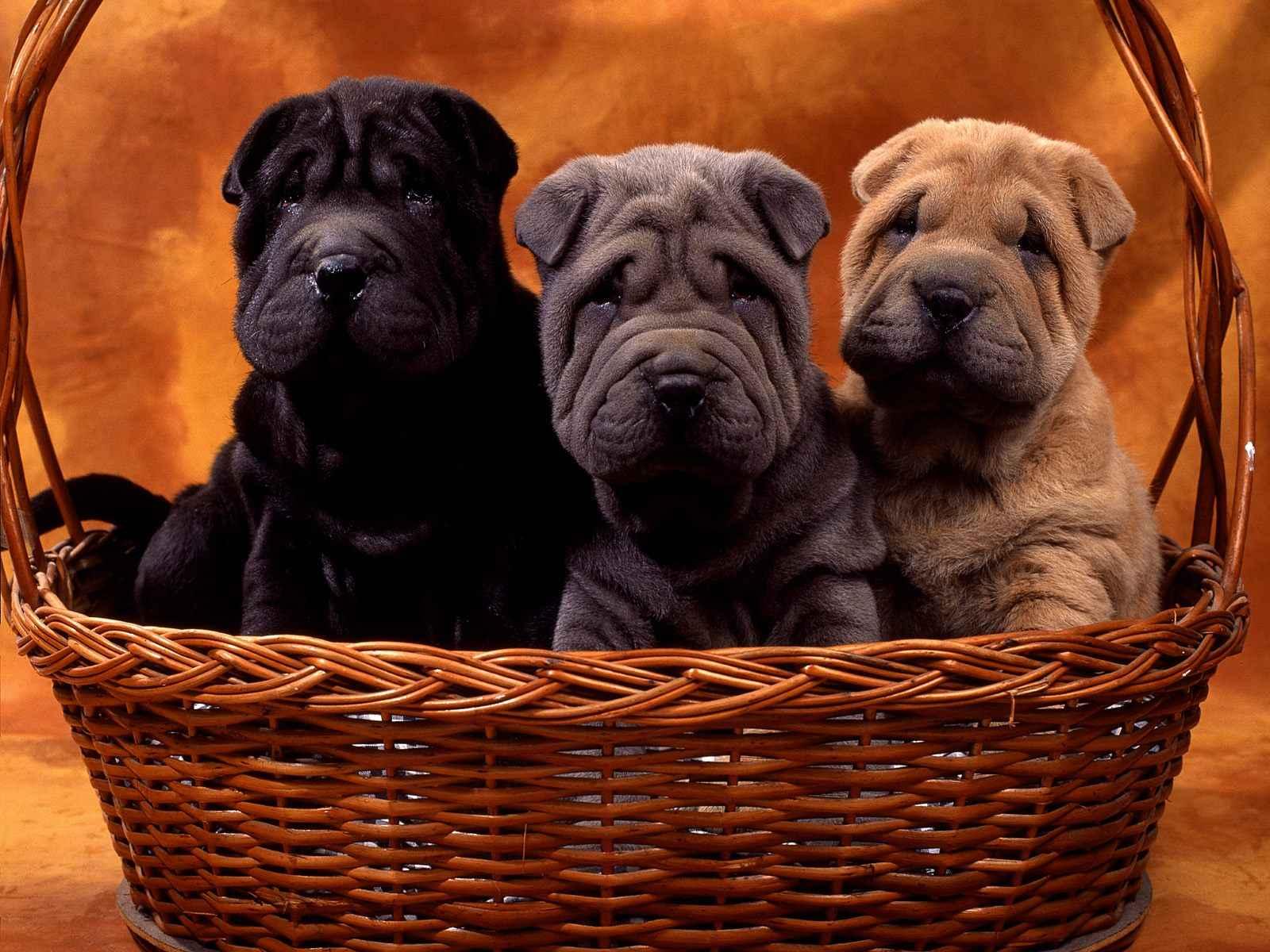 Free Puppy Food Sampldes