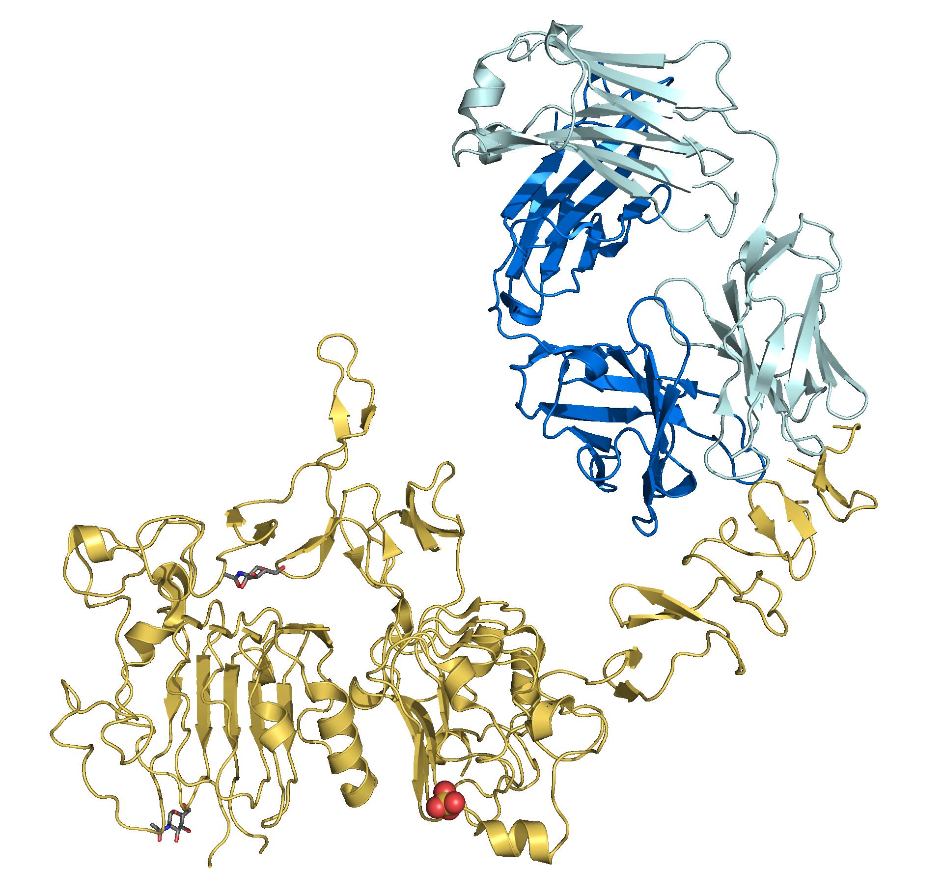 Trastuzumab - Wikipedia