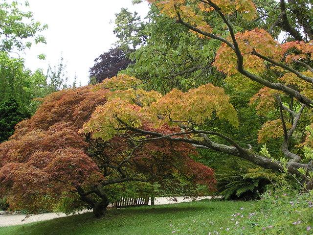 Trees in the Botanic Gardens, Bath - geograph.org.uk - 283093