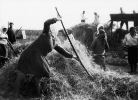 Threshing in the fields in a Jewish kolkhoz. In order to promote agricultural labor amongst Russian Jews, on January 17, 1925 the CPSU formally created a government committee, the Komzet, and a complementary public society, the OZET. The OZET was headed by Old Bolsheviks: Yuri Larin, and later Semyon Dimanstein, and its board included such figures as Solomon Mikhoels and Vladimir Mayakovsky.