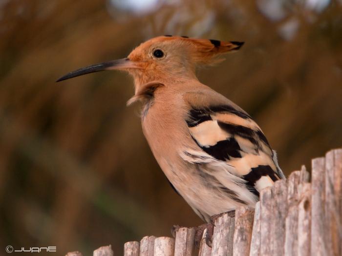 Las aves exóticas más comunes