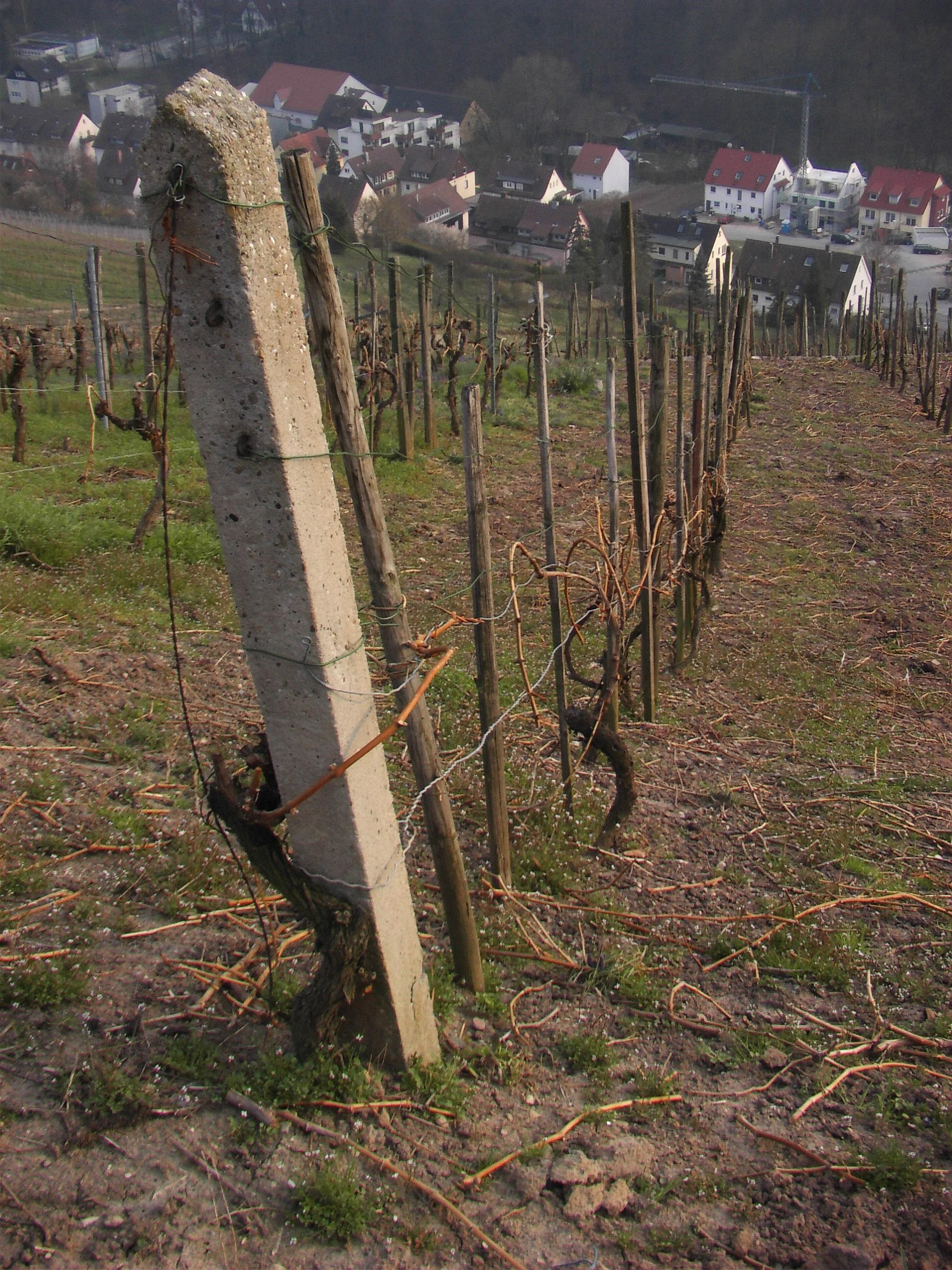 File Betonpfosten Weinbau Jpg Wikimedia Commons