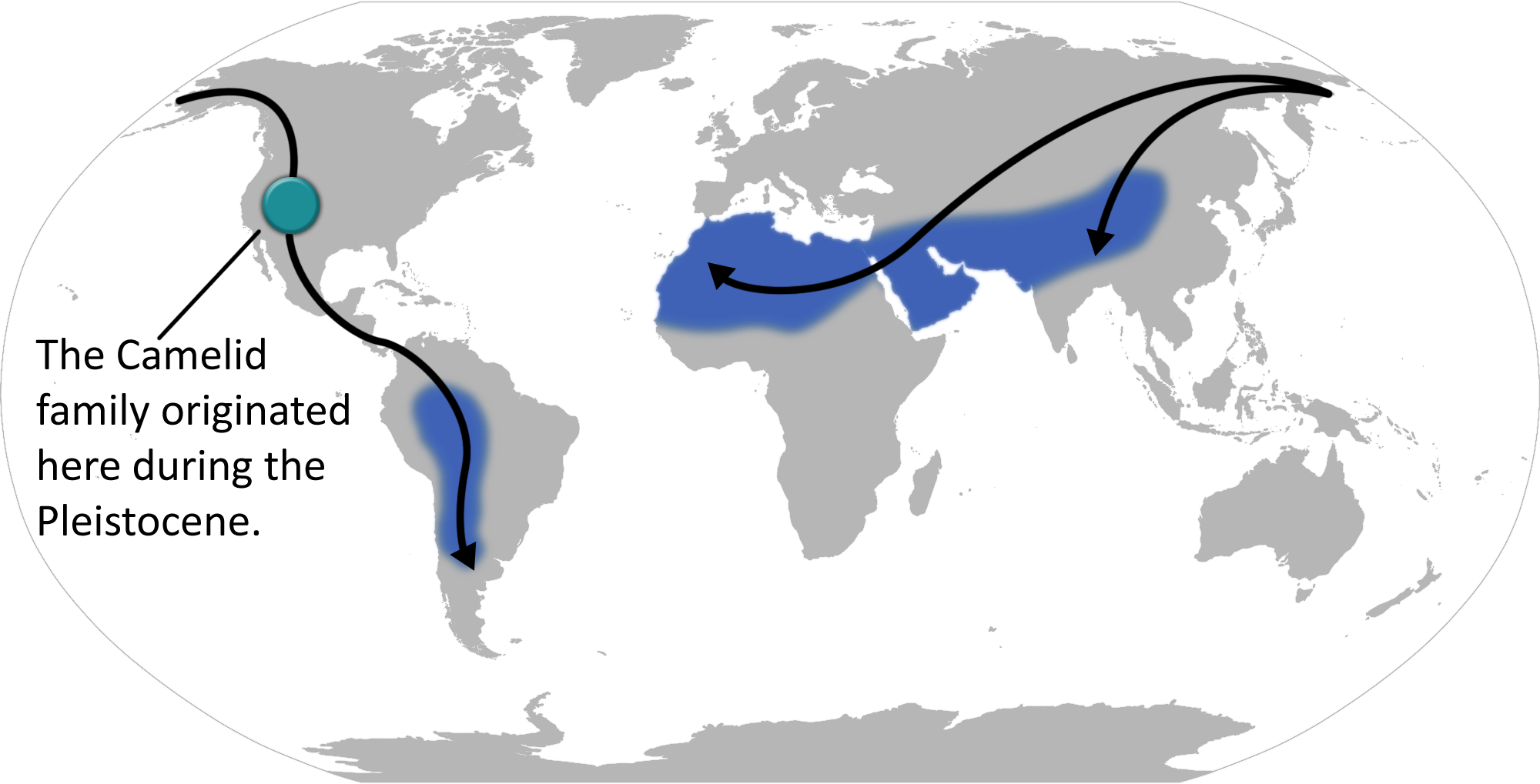 http://upload.wikimedia.org/wikipedia/commons/1/16/Camelid_locations_and_migration.png