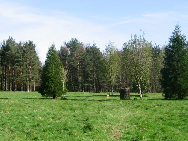 Clearing in Binning Wood - geograph.org.uk - 5724
