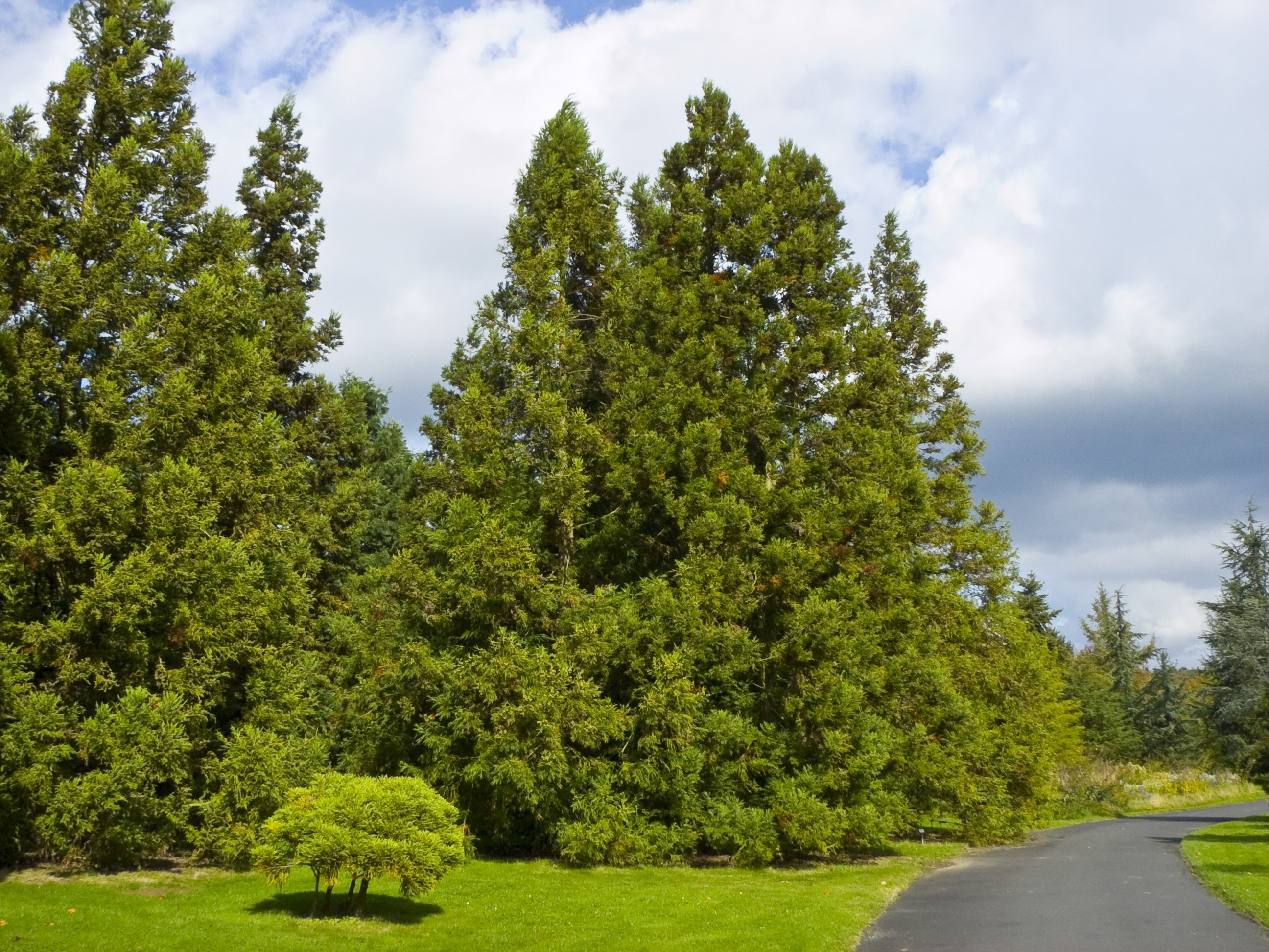 Image Result For Free Tree Of