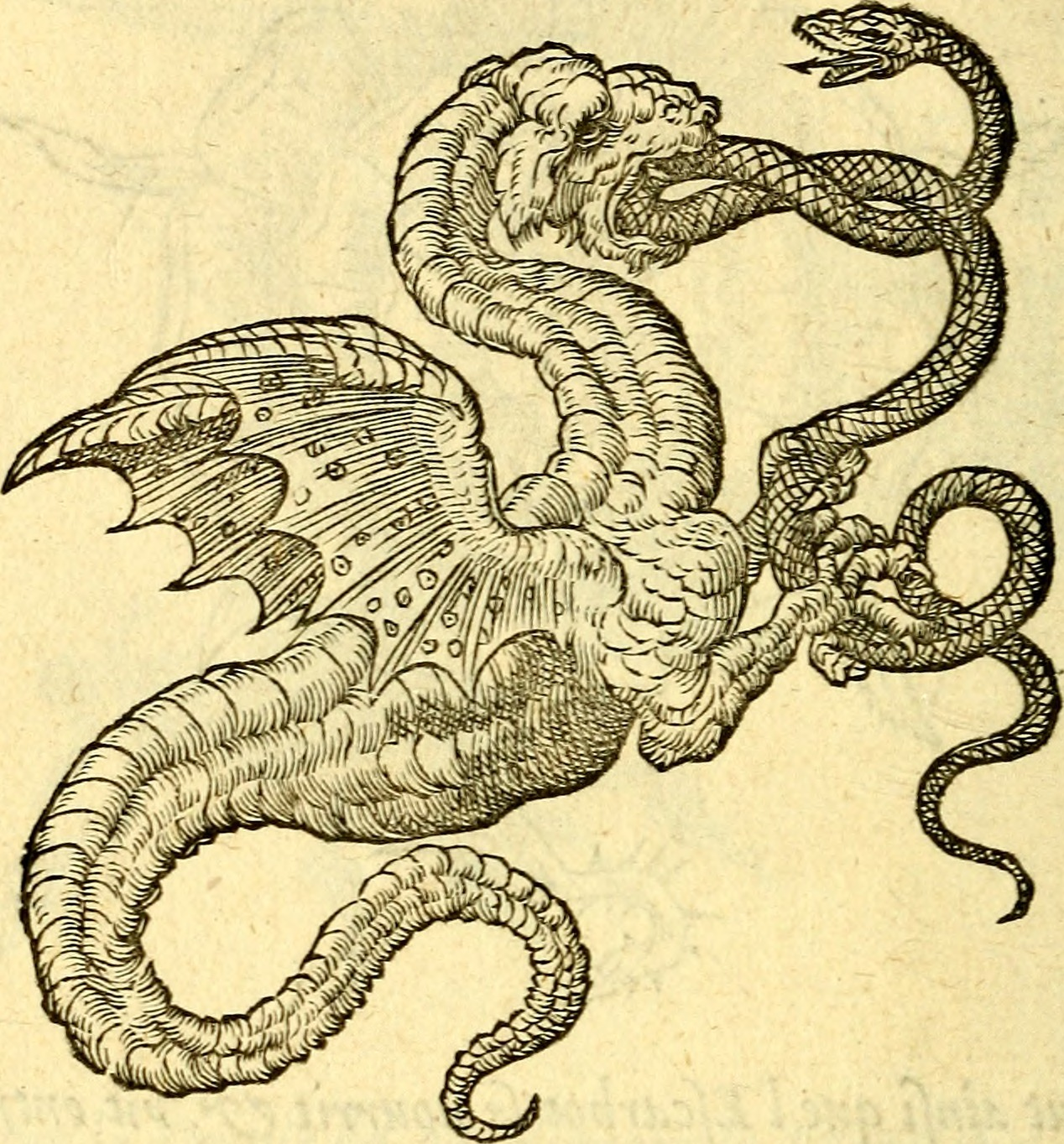 """Devises heroïqves (1557), This illustration on page 216 bears the Latin motto """"Vunius compendium, alterius stipendium"""" (The one profits, the other loses), Claude Paradin adds an explanation in French: Si un Serpent ne mangeoit l'autre, iamais ne deuien-droit Dragon. Ainsi les Riches & puissant, croissent au dommage d'autrui. (If a Serpent did not eat another, it would never become a real Dragon. Thus do the Rich and powerful grow by harming  another.)"""