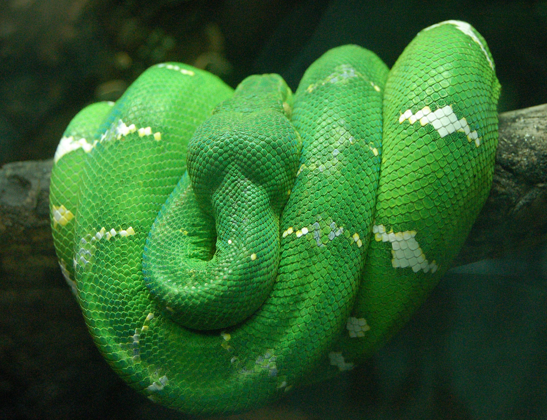 предложения зеленая змея сверху желтые пятна фото и название можете приехать
