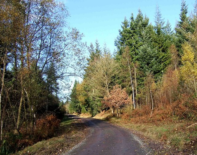Forestry road, Wyre Forest - geograph.org.uk - 1623578