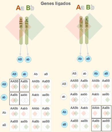 File:Genes dependientes.png