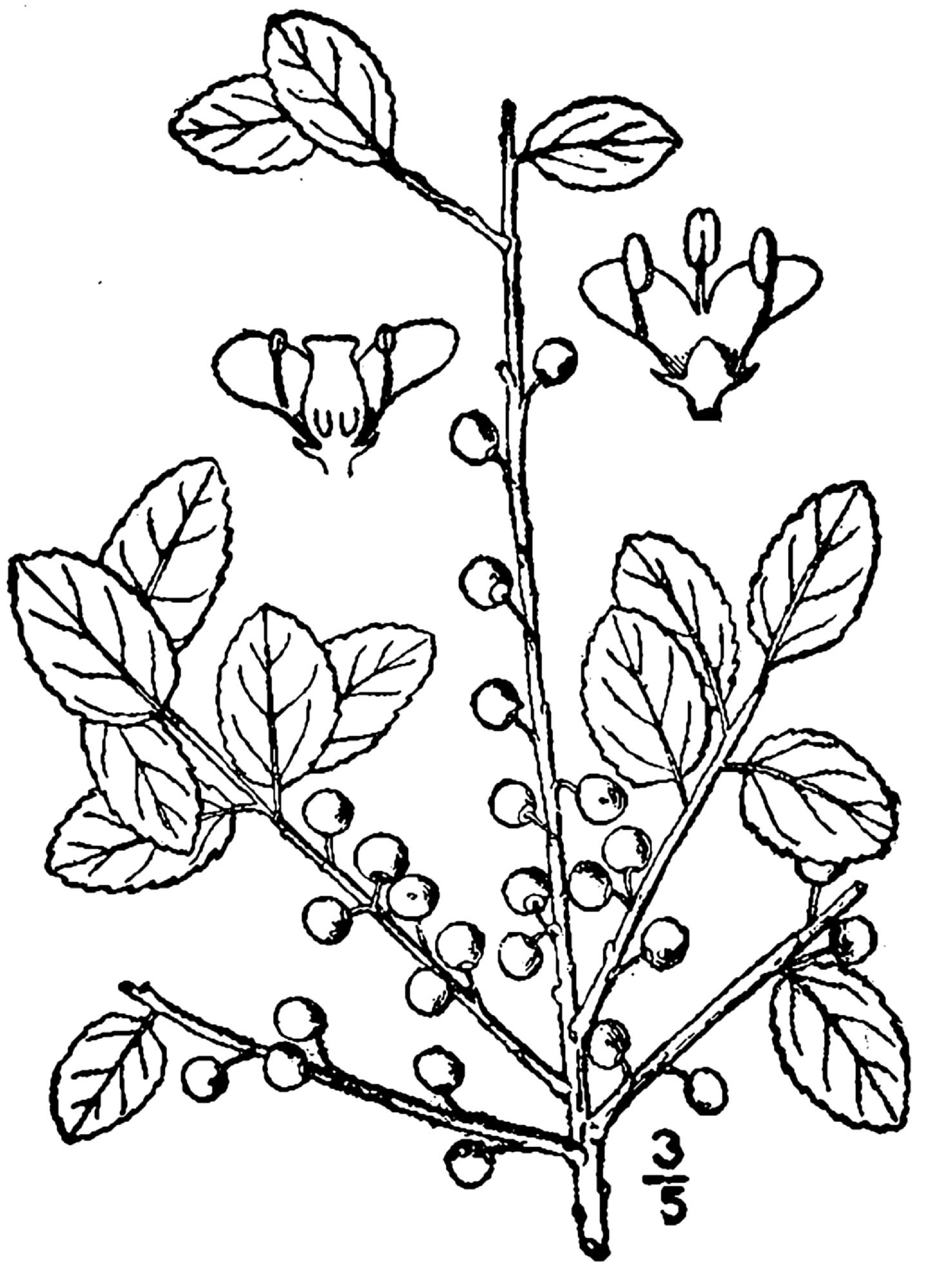 Debulhador de milho manual botanist gray