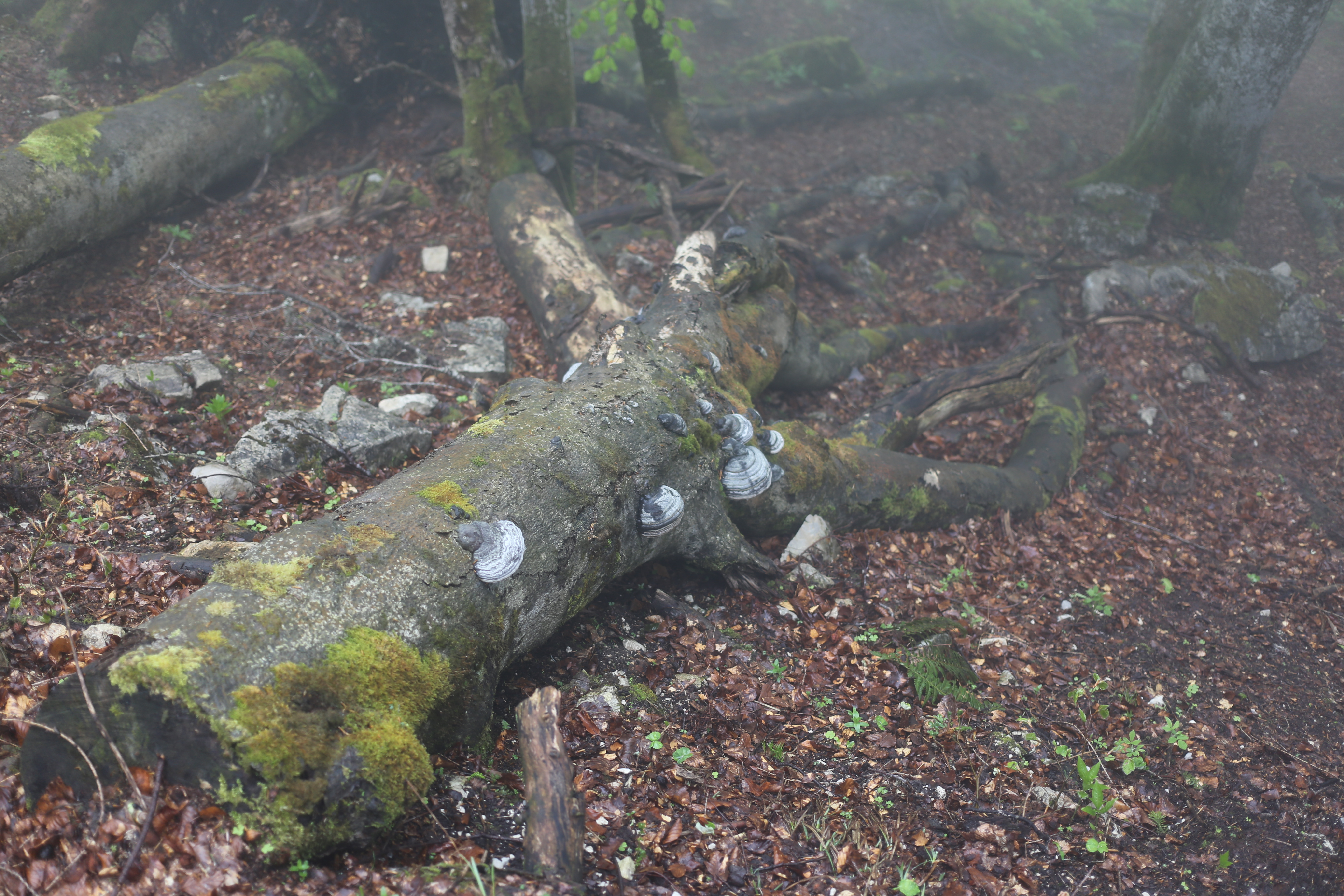 File Leben Und Leben Lassen In Der Natur Jpg Wikimedia Commons