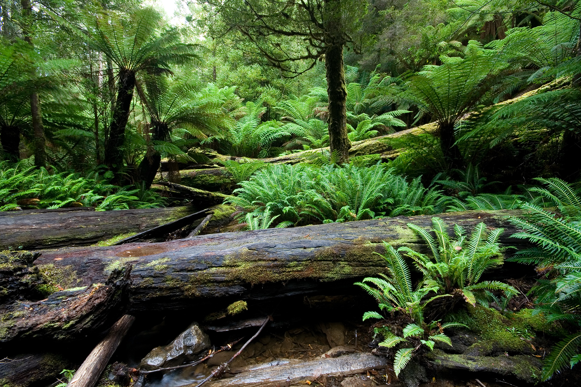 rain forest vegetaion Cruise thru the maui rainforest on the road to hana tour see waterfalls, gulches, incredible trees and beautiful flowers learn the stories too book now.