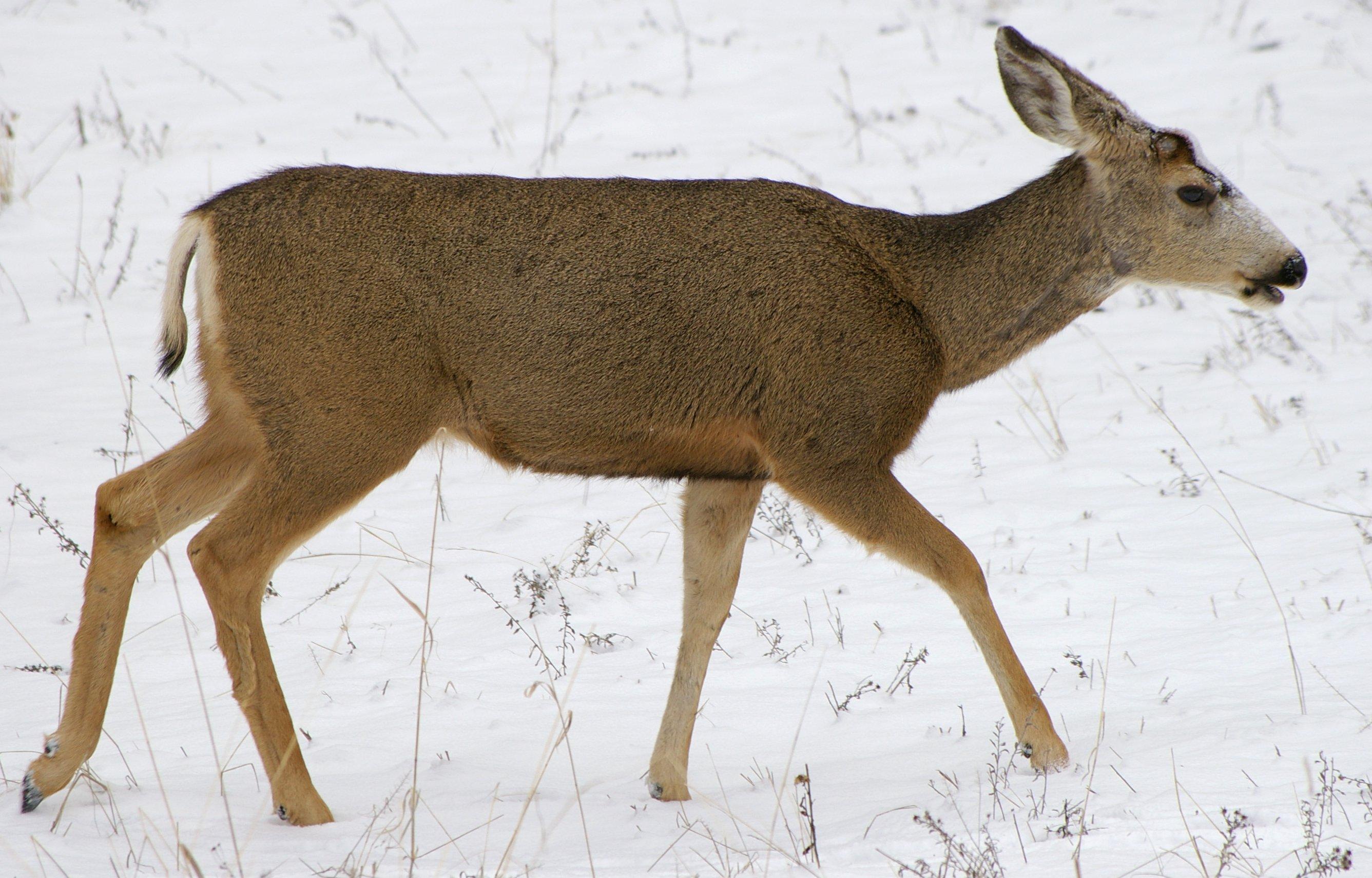 Deer Place  Se Th Ct Deerfield Beach Fl