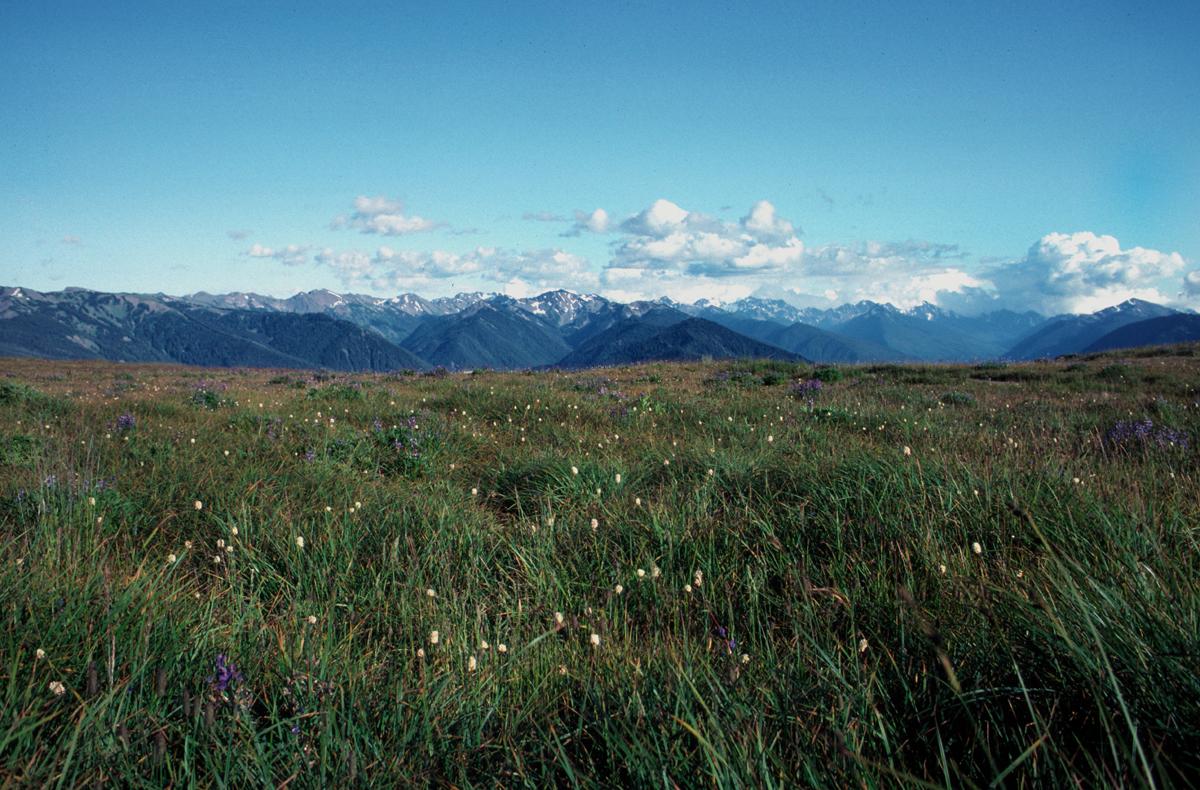 Daniel J Evans Wilderness Wikipedia