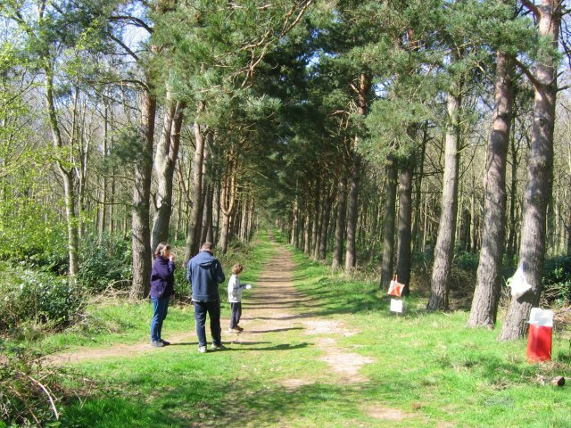 Orienteering in Binning Wood. - geograph.org.uk - 5725