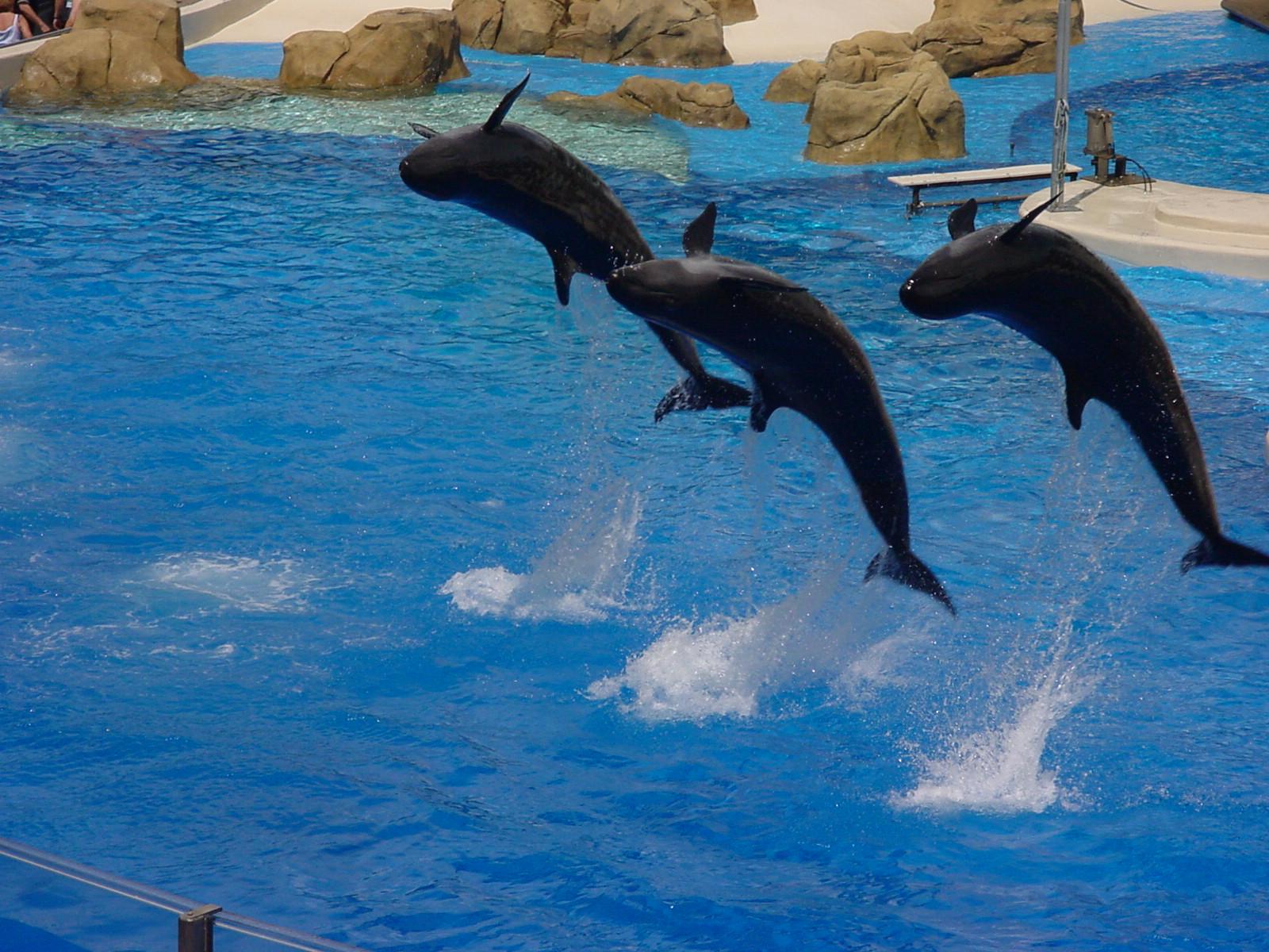 http://upload.wikimedia.org/wikipedia/commons/1/16/Orlando_Sea_World_Dolphins_2.jpg