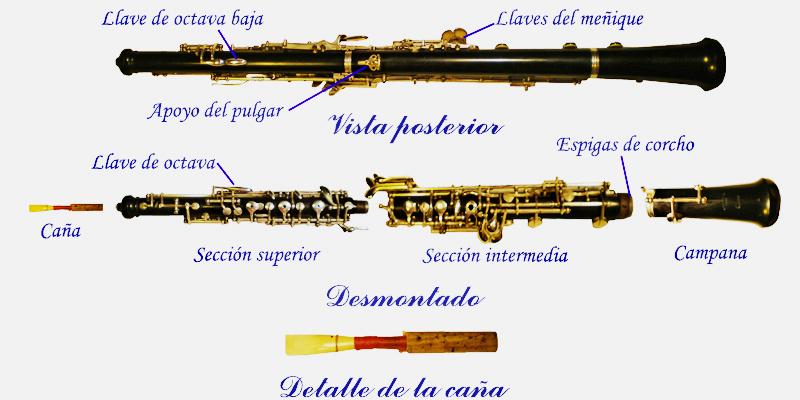 El oboe está construido en tres partes: la cabeza o cuerpo superior del instrumento, donde va colocada la mano izquierda y se introduce la caña; la parte mediana o cuerpo inferior del instrumento, donde se coloca la mano derecha; y el pabellón o campana, que es la prolongación ensanchada de la parte o cuerpo inferior. Todas estas partes o cuerpos del instrumento encajan unas con otras por medio de una especie de espigas recubiertas de corcho.
