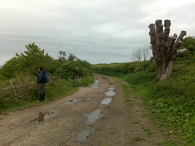 Path to Old Harry Rocks - geograph.org.uk - 1319351
