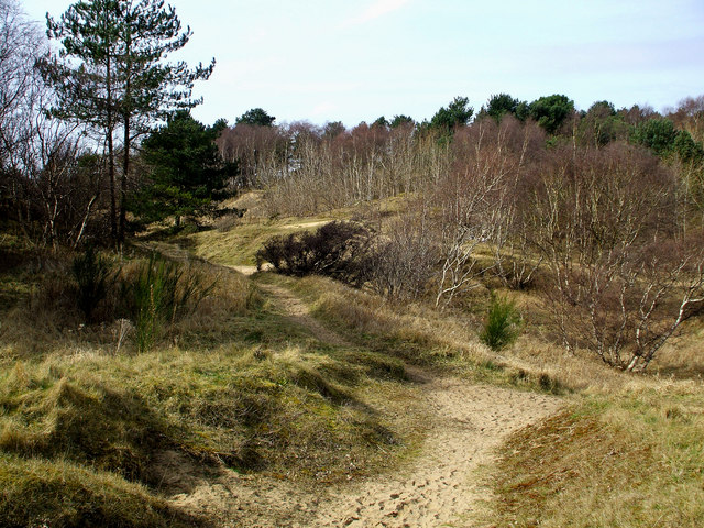 Pinewoods in Formby. - geograph.org.uk - 1204758