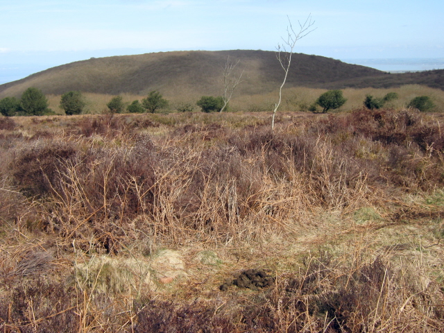 Robin Upright's Hill - geograph.org.uk - 1766890