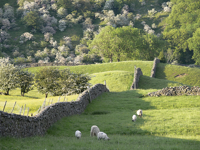 File:Sheep and May, Arkengarthdale.jpg