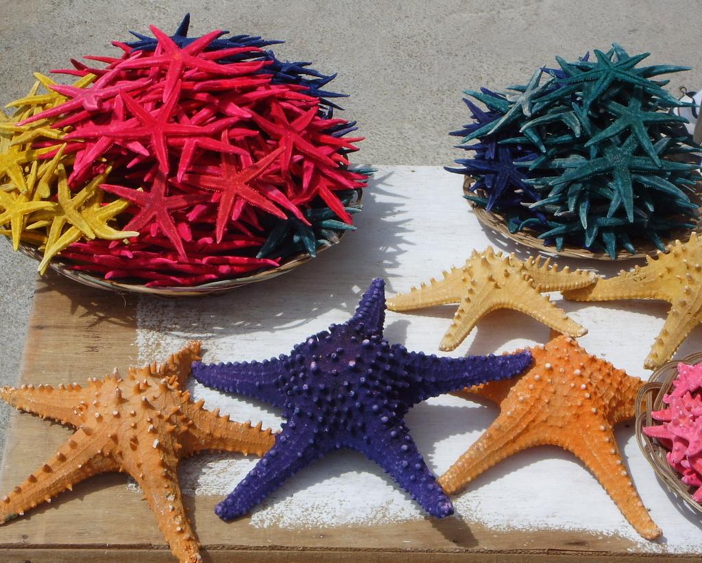 File:Starfish for sale.jpg - Wikimedia Commons