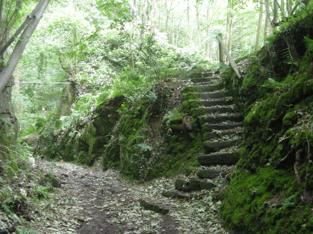 Steps in the woods - geograph.org.uk - 864277