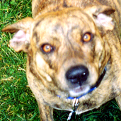 My dog, Mocha, in a picture taken and cropped ...
