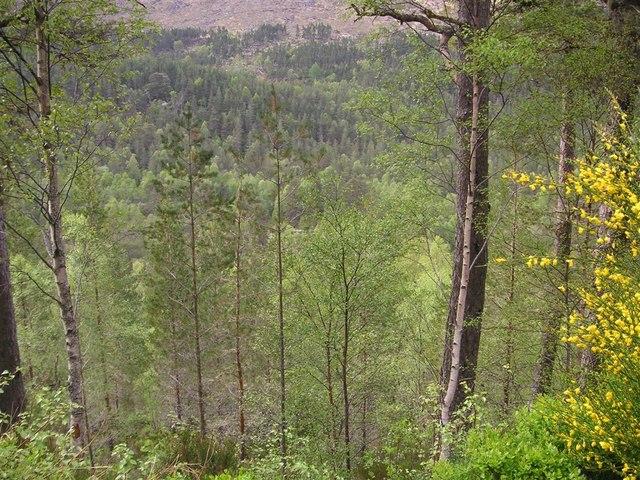 Tree-covered slopes near Dog Falls, Glen Affric - geograph.org.uk - 841433