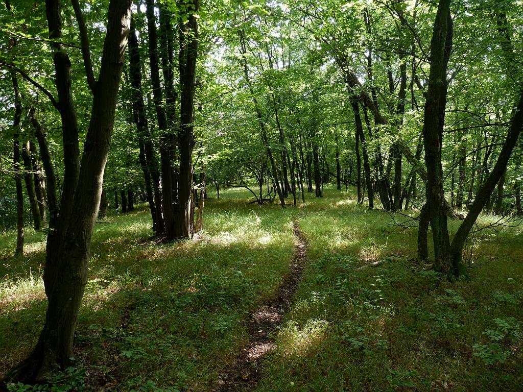 File Velký Hornek les Wikimedia mons