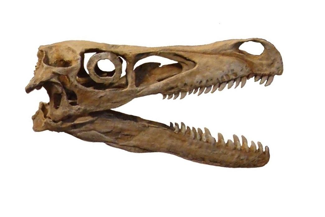 Skull Ring By David Yurman