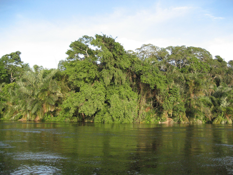 Resultado de imagen de Congo selva