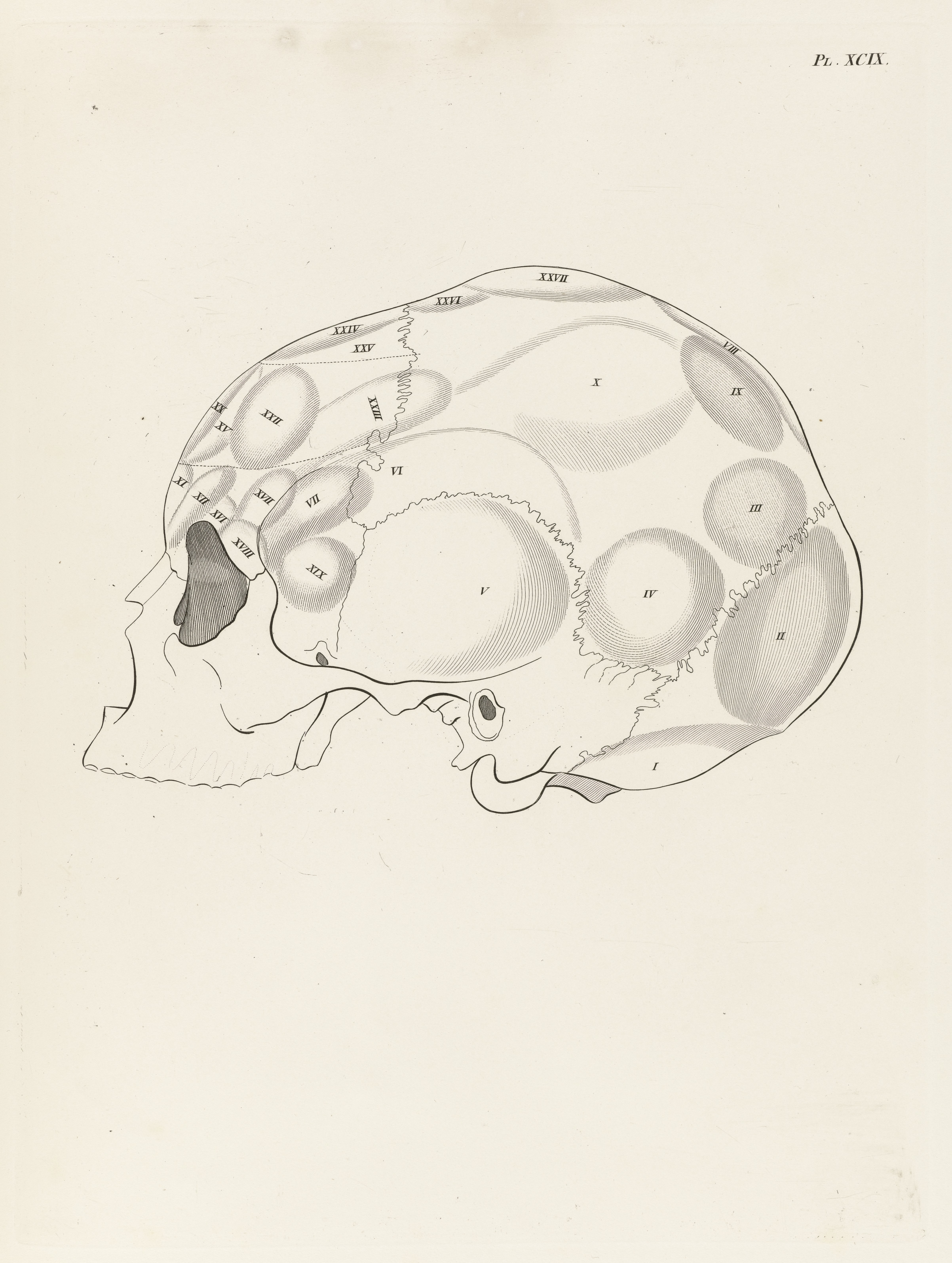 File:Anatomie et physiologie du système nerveux en général Wellcome ...