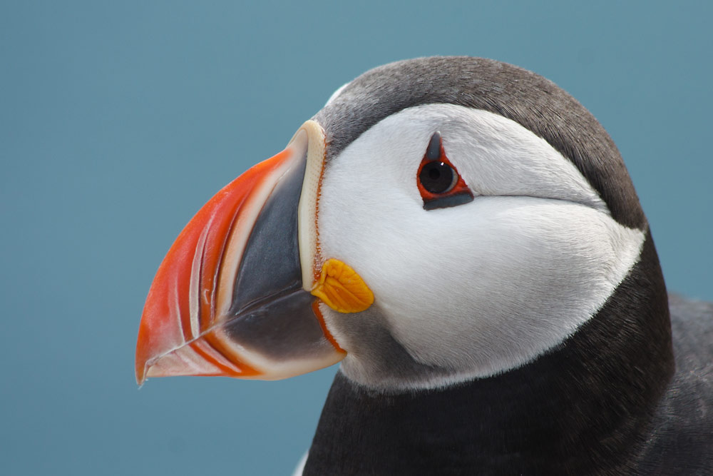 Where Is Puffin Island