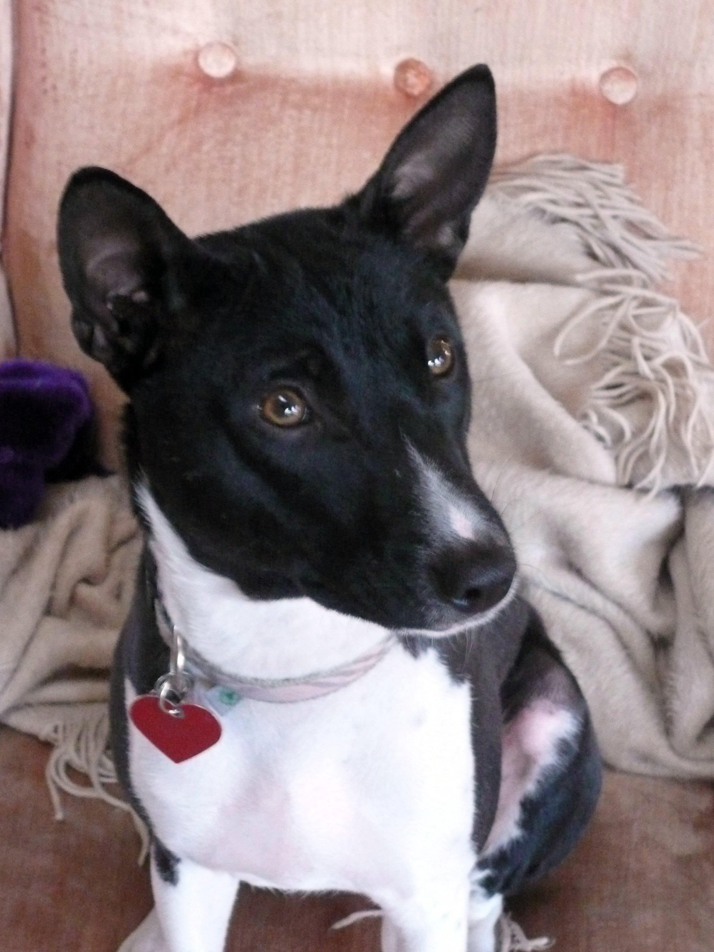 Small Breed Dog Royal Canine Uk