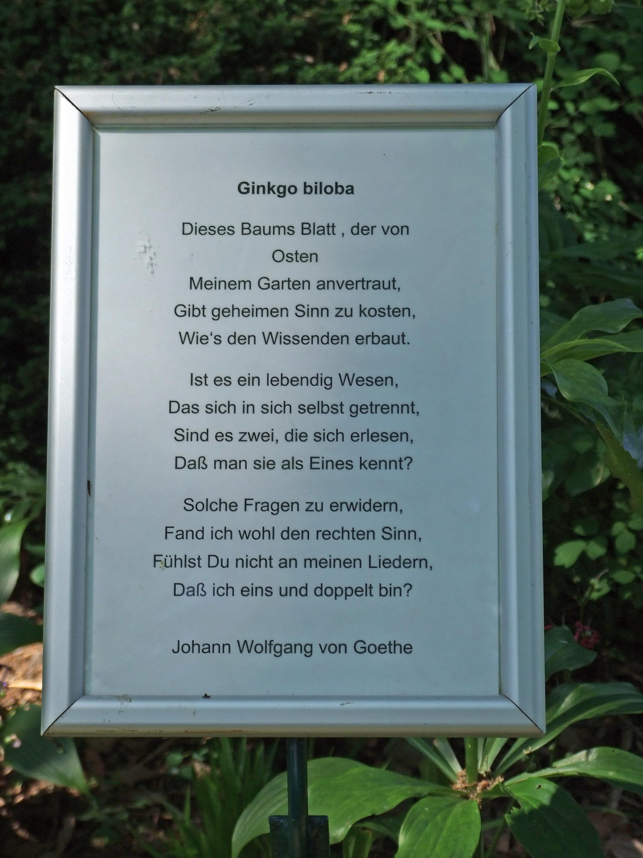 Filebotanischer Garten Ffm014ejpg Wikimedia Commons