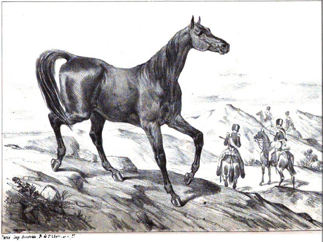 Cheval limousin wikip dia - Tchoupi et le cheval ...