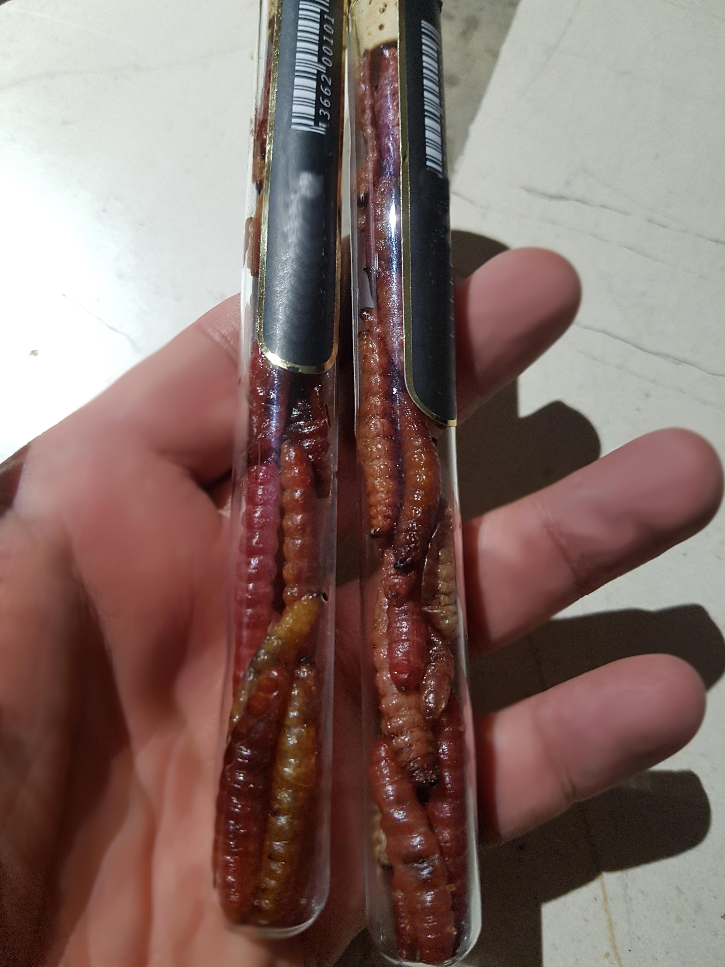 gusanos de nuez