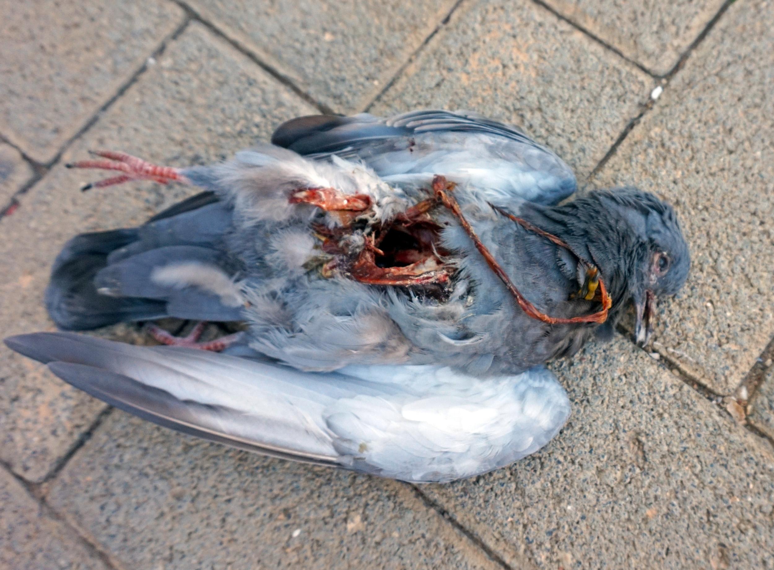 birdcels are not even human *Warning: BRUTAL*