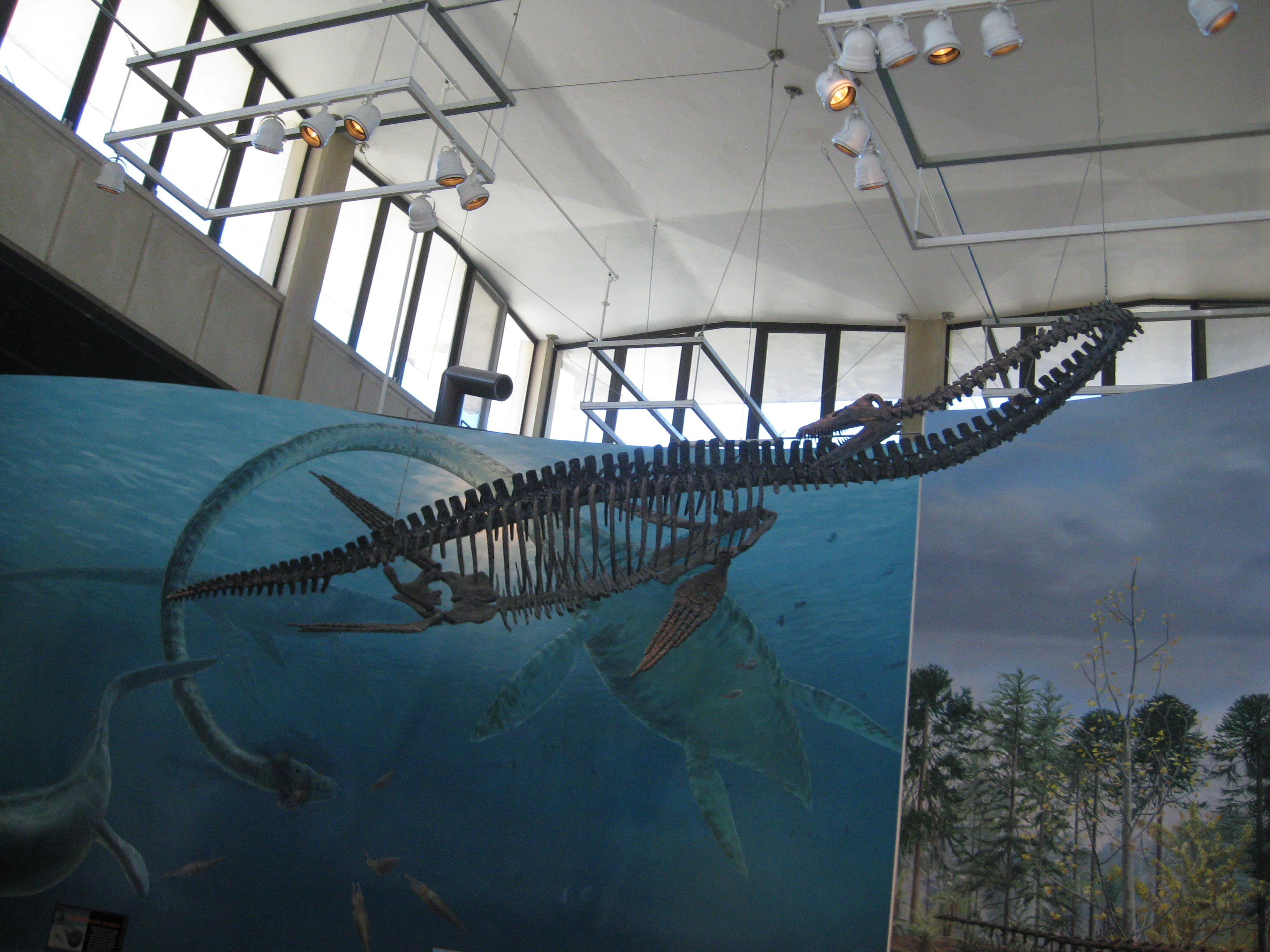 File:Elasmosaurus Skeleton.jpg - Wikimedia Commons