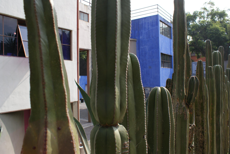File exterior del museo casa estudio diego rivera y frida for Cactus de exterior