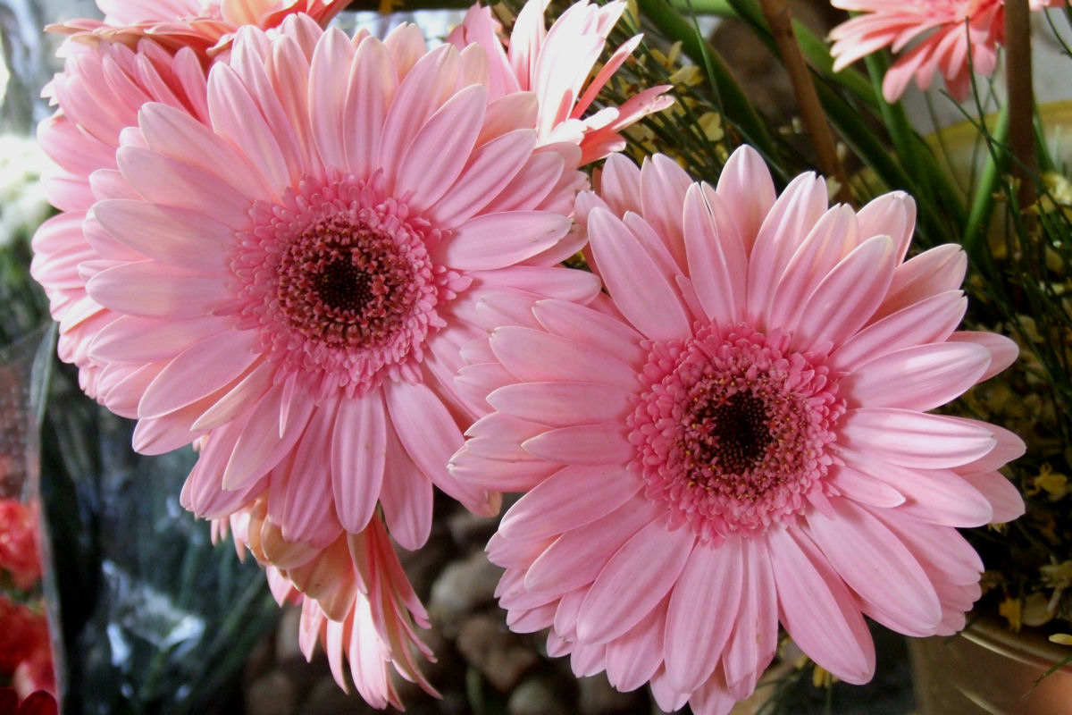 Image Result For Daisy Garden Color